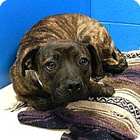 Adopt A Pet :: Little Mochie URGENT - Sacramento, CA