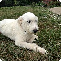 Adopt A Pet :: Delilah - Hagerstown, MD