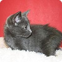 Adopt A Pet :: SIERRA - SILVER SPRING, MD