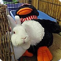 Adopt A Pet :: Wiggles - Foster, RI