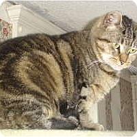 Adopt A Pet :: Minnie - Monroe, CT