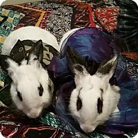 Adopt A Pet :: Devika and Eclair - Williston, FL
