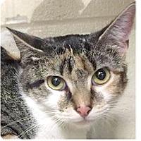 Adopt A Pet :: Peach - Springdale, AR