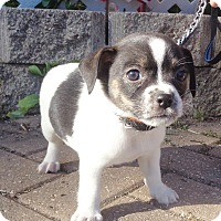 Adopt A Pet :: Farquhar - West Chicago, IL