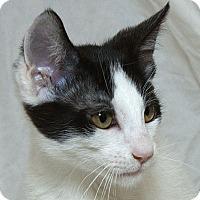 Adopt A Pet :: Benicio  V - Sacramento, CA