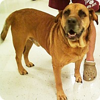 Mastiff Mix Dog for adoption in Midlothian, Virginia - Hooch