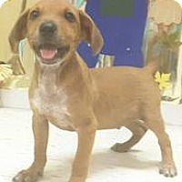 Adopt A Pet :: Tumbler - Patterson, NY