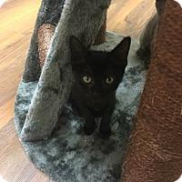 Adopt A Pet :: Maificent - Georgetown, DE