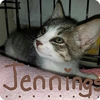 Adopt A Pet :: Jennings - Glendale, AZ