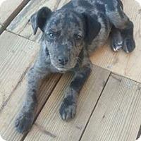 Adopt A Pet :: Haley - Ellaville, GA