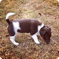 Adopt A Pet :: Delta - Powder Springs, GA