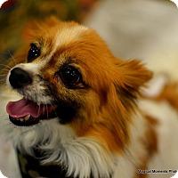 Adopt A Pet :: Jake - Edmond, OK