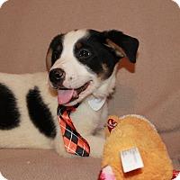 Adopt A Pet :: Spike - Albany, NY