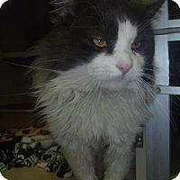 Adopt A Pet :: The Amazing Kenny - Hamburg, NY