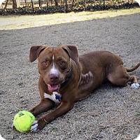 Adopt A Pet :: Noel - Mount Laurel, NJ