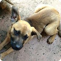 Adopt A Pet :: Pebbles - Visalia, CA