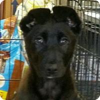 Adopt A Pet :: Acorn - Chico, CA