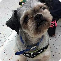 Adopt A Pet :: Paula Dean - Buffalo, NY