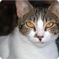 Adopt A Pet :: Sally FE2-7771 - Thibodaux, LA