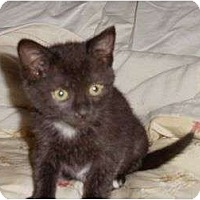 Adopt A Pet :: Baby Nona - Port Republic, MD