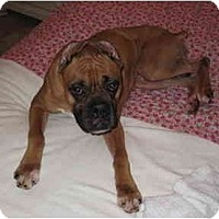Adopt A Pet :: Bob - Thomasville, GA