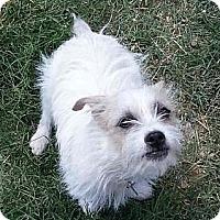 Adopt A Pet :: DUCKY - Phoenix, AZ