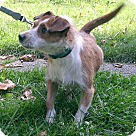 Adopt A Pet :: Chuck