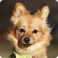 Adopt A Pet :: Rustica - Ile-Perrot, QC