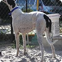 Adopt A Pet :: Fantasy - West Palm Beach, FL