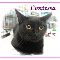 Adopt A Pet :: Contessa - Orange City, FL