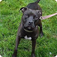 Adopt A Pet :: Lulu - Aurora, CO