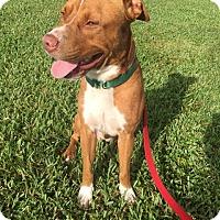 Adopt A Pet :: PISTACHIO (JL-JW) - Tampa, FL