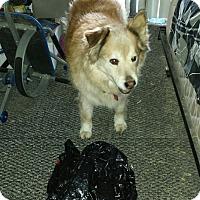 Adopt A Pet :: Brooke - Sacramento, CA