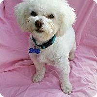 Adopt A Pet :: Max loves to run & play! - Redondo Beach, CA