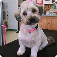 Adopt A Pet :: Brody - Santa Maria, CA