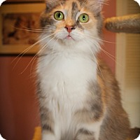 Adopt A Pet :: Morgana - Hamilton, ON