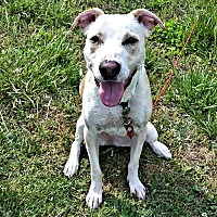 Adopt A Pet :: Zelda - Fredericksburg, VA