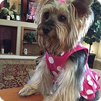Adopt A Pet :: Lady Bug - Goodyear, AZ