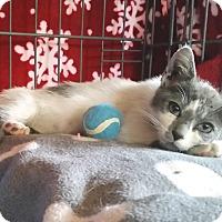 Adopt A Pet :: Romeo - Upland, CA