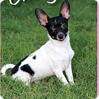 Adopt A Pet :: Cindy - Odessa, TX