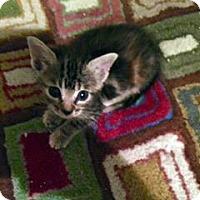 Adopt A Pet :: Wicca - Austin, TX