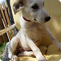 Adopt A Pet :: Simone - Manhattan, KS