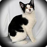 Adopt A Pet :: Cardborad - Bradenton, FL