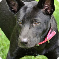 Adopt A Pet :: Carol - Albemarle, NC
