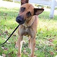 Adopt A Pet :: Autumn - New Oxford, PA