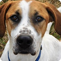 Adopt A Pet :: Brett- I'm going to NY! - Spartanburg, SC