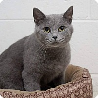 Adopt A Pet :: Winter - Columbia, TN