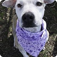 Adopt A Pet :: Rose aka Persia - Georgetown, TX