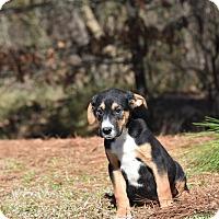 Adopt A Pet :: Bonus - Groton, MA