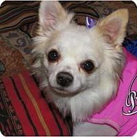 Adopt A Pet :: MADISON - Hesperus, CO